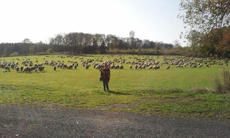 Hirtin und Herde...